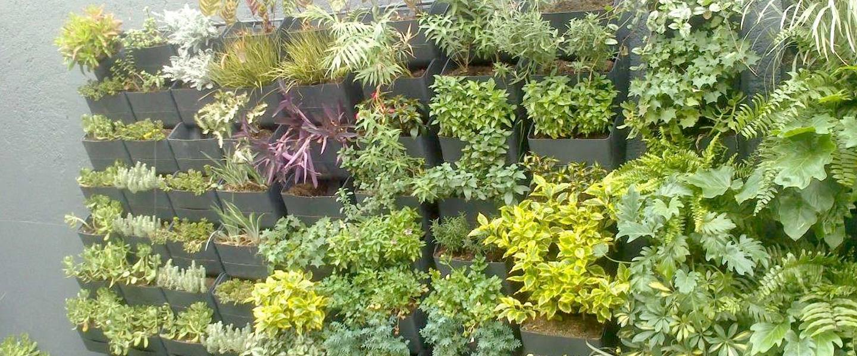 Crea tu propio jard n vertical bricopared beissier for Crea tu jardin