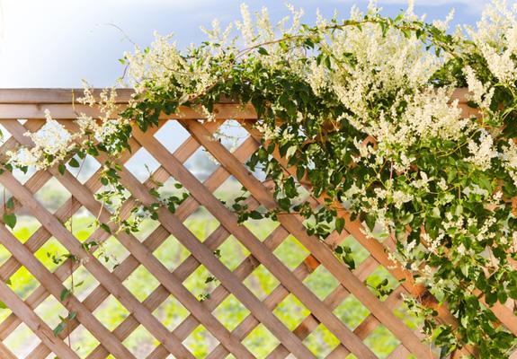 Instalar celos a en el jard n bricopared beissier - Celosia de madera para jardin ...