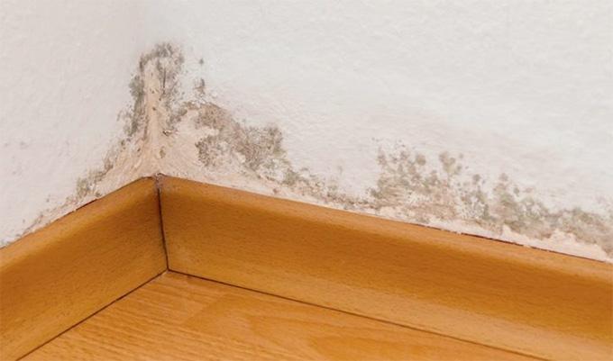 ¿Cómo debo actuar sobre un muro con humedad capilar?